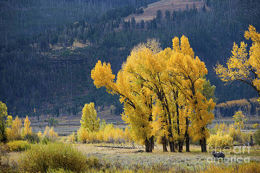 Fall in Yellowstone by Deby Dixon