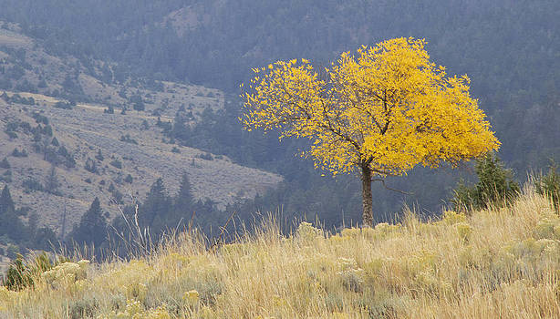 Fall in Yellowstone National Park by Iris Page