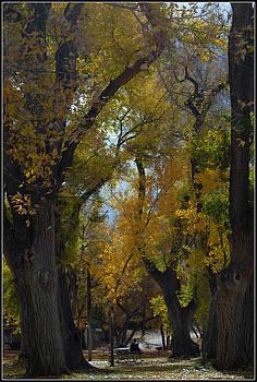 Fall by Kasie Morgan