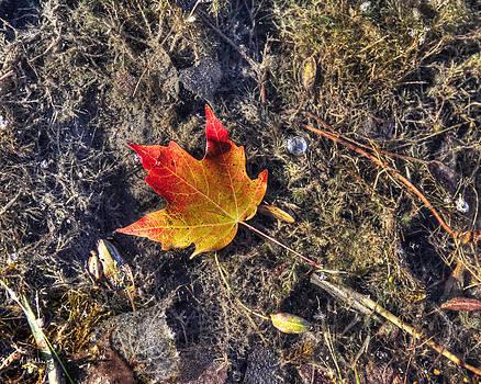 Fall Leaf by Andrea Kelley