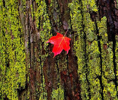 Fall leaf by Shaivi Divatia