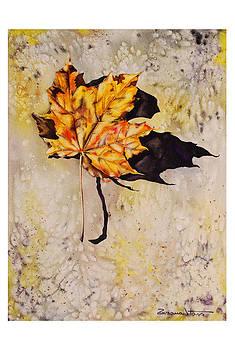 Fall leaf by Zuzana Vass