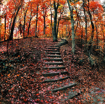 Fall Leaves at Wildcat Den by Jamieson Brown