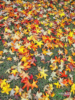 Fall Leaves by Bob Winberry