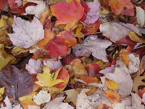 Fall Leaves Composition 1 by Kristin Clarke
