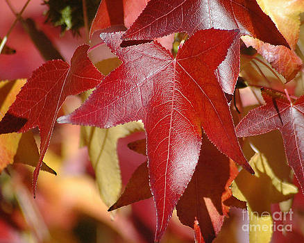 Fall Leaves I by Robert  Suggs