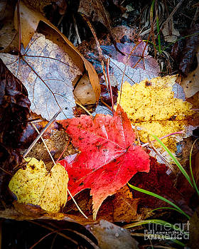 Fall Leaves in the Rain by David Perry Lawrence