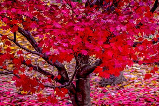 Judith Barath - Fall Leaves