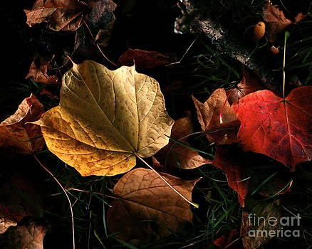 Fall Leaves  by Kimberly Nickoson