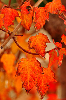 Fall Leaves by Mischelle Lorenzen