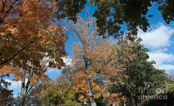 Fall Leaves Opry  by Denise Ellis