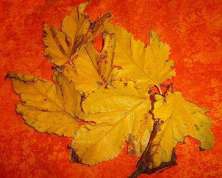 Fall Leaves by Rosalie Klidies