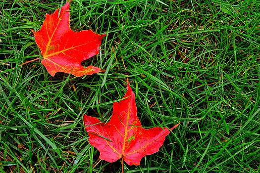 Fall leaves by Shaivi Divatia