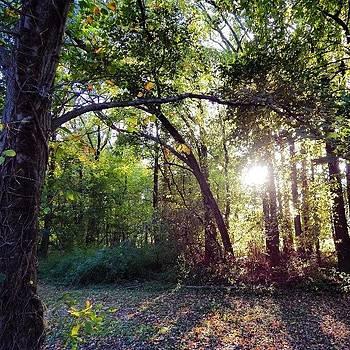 #fall #levittown #plumbridge #pa by Brian Harris