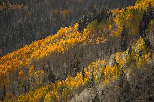 Fall Light by Dawn Morrow