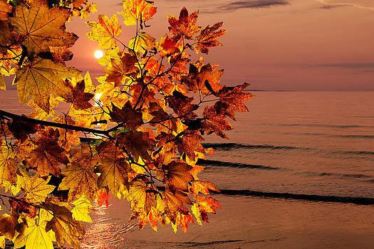 Jo Ann Snover - Fall morning