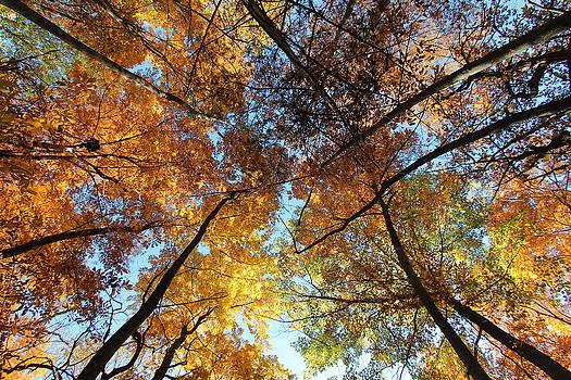 Fall Mosaic by Steve ODonnell