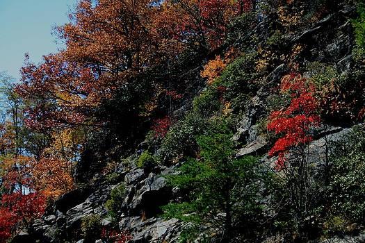 Fall Mountainside by Beth Andersen
