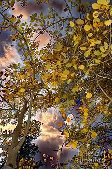 Fall by Nicole Markmann Nelson