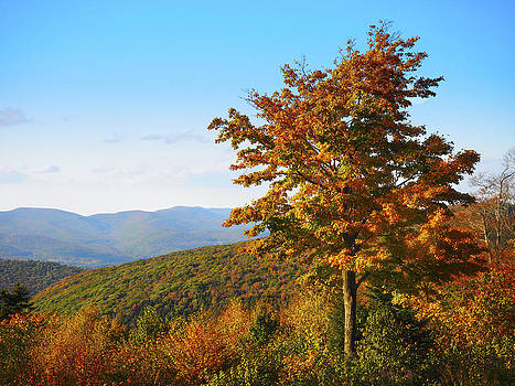 Fall on Mt. Greylock by Kyle Wasielewski