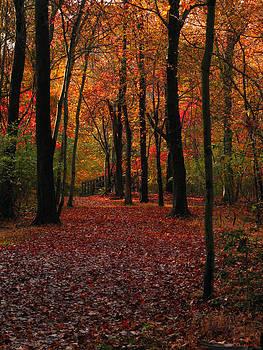Raymond Salani III - Fall Path
