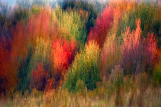 Fall Patterns by Sandra Silva