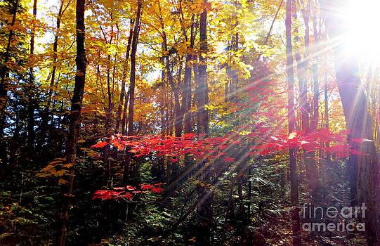 Autumn Light by Jaunine Roberts