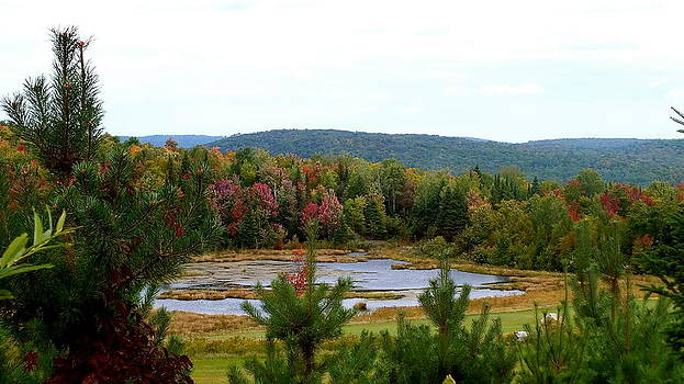 Fall Pond by Lesley McCormack