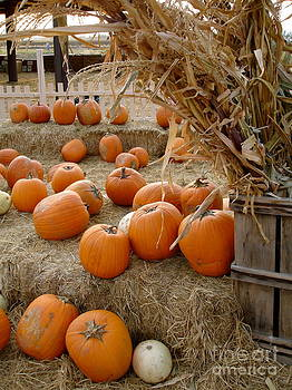 Fall Pumpkin Patch by Danielle Groenen