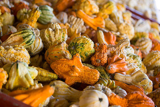 Fall Pumpkins by Gerald Adams