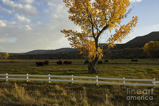Jerry McElroy - Fall Ranch