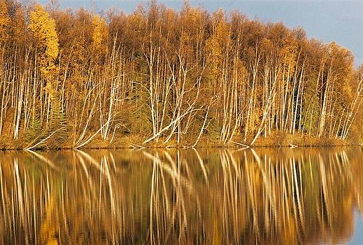 Fall Reflections by Ginger Bear