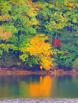 Fall Reflections by Judy  Waller