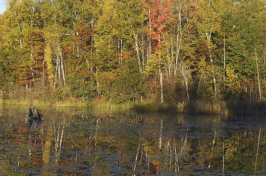 Fall reflections by Kevin Snider