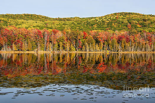 Fall Reflections by Maria Aiello