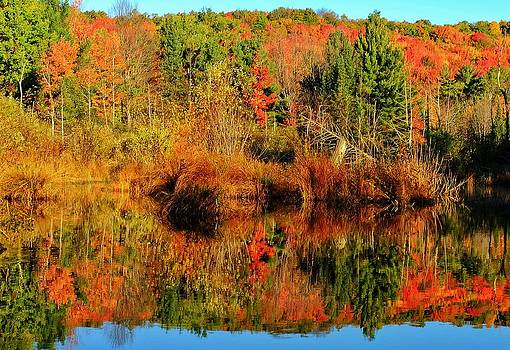 Fall Reflections by Thomas Nighswander
