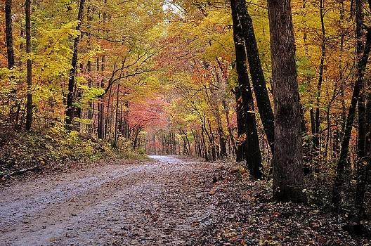 Marty Koch - Fall Road
