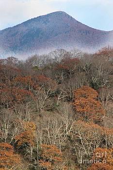 Fall Smoky Mountains by AR Annahita
