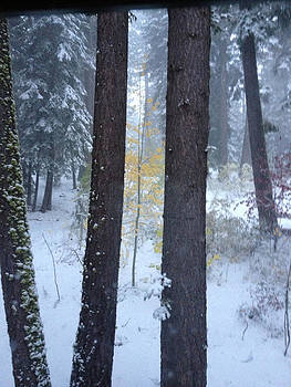 Fall Snow Tahoe by Heather Lavoie