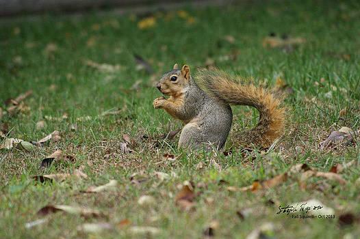 Fall Squirrel by Steph Maxson