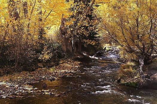 Fall Stream by David Winge