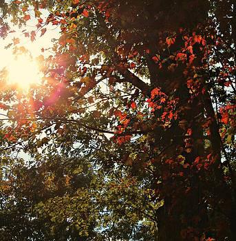 Fall Sun by Candice Trimble