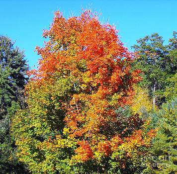 Fall Takes Over by Lisa Gifford