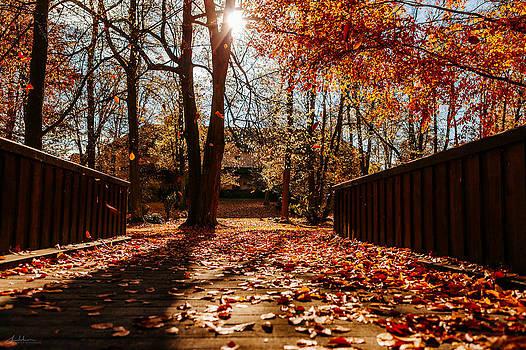 Fall by Tomas Hudolin