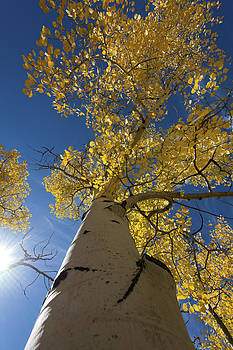 Fall Tree by David Yack