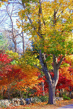 Fall tree by Lorena Mahoney