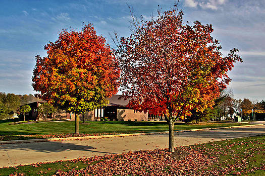 Fall Trees by Al Shields