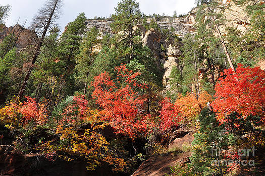 Fall Trees and Cliff by Betsy Aguirre