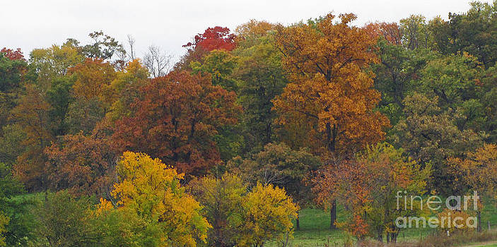 Minding My  Visions by Adri and Ray - Fall Trees Colorful and Pretty