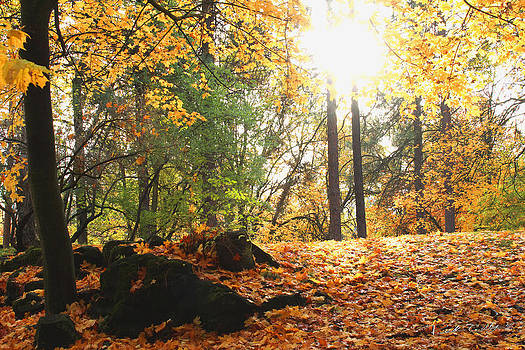 Fall Trees in Manito Park by Rick Colby